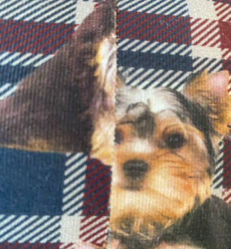 attachment-https://petsglamour.de/wp-content/uploads/2021/02/yorkie_naht_detail_800px-458x493.jpg